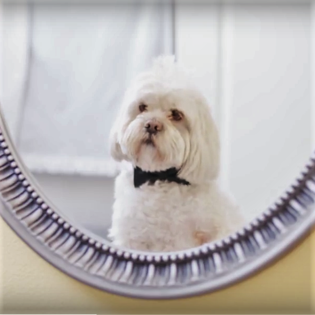 Dog Proposal, Dogs, Romantic Films