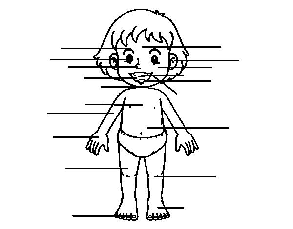 Disegno Di Corpo Frontale Da Colorare Stampare O Scaricare Colora