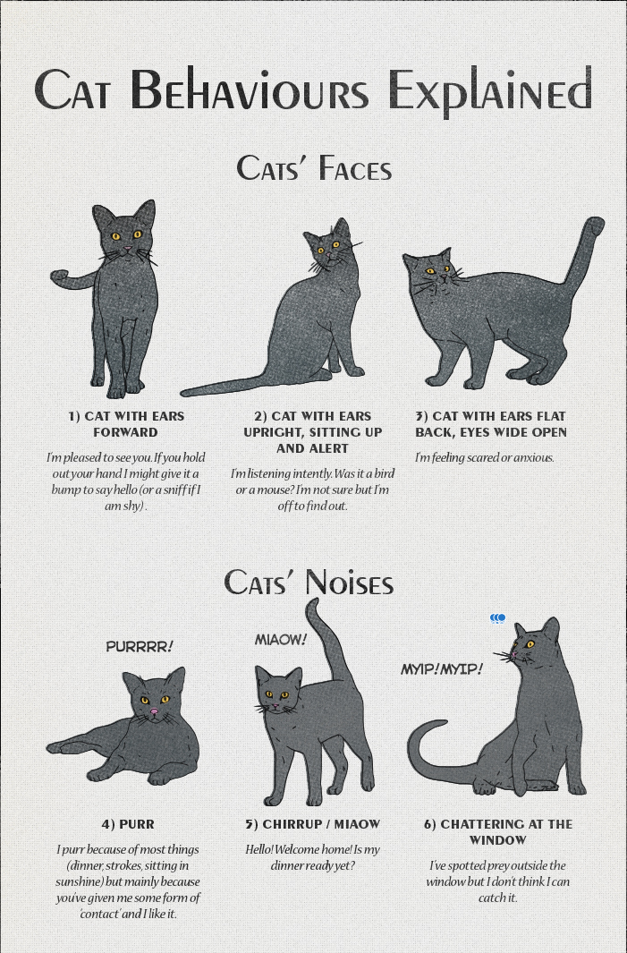 Americaninfographic Cat Behavior Cat Language Cat Facts