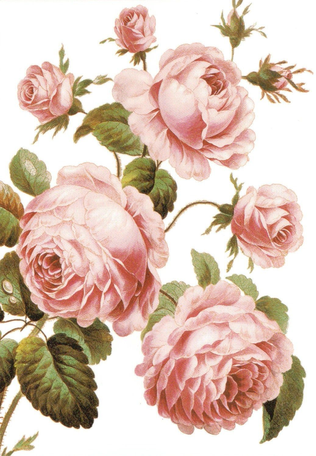 Картинки нарисованных роз для декупажа