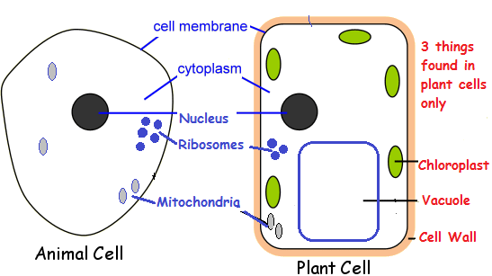 Cell , 5 Plant And Animal Cell Comparison Images : Compare ...