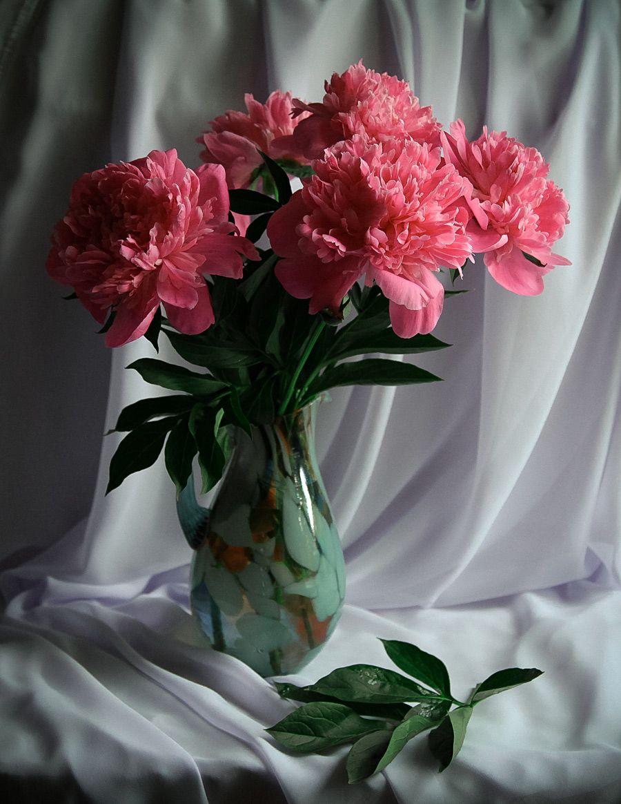 причал художественное фото цветка тебя