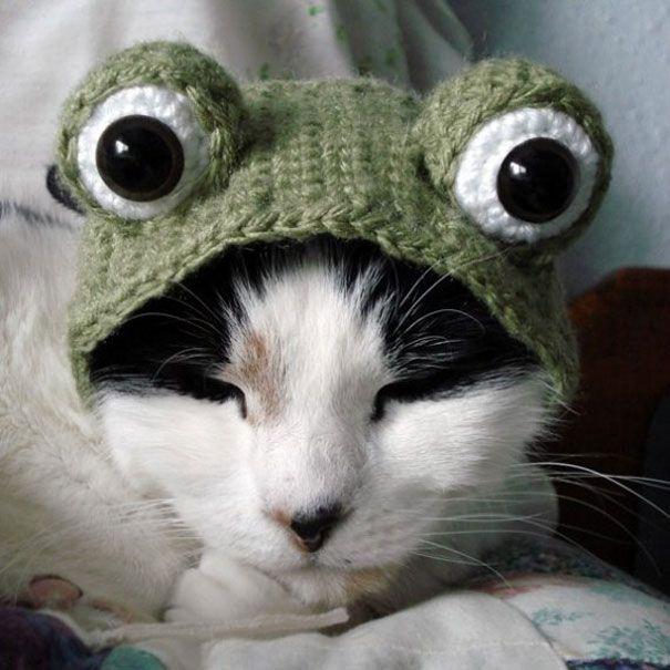 Quatang Gallery- Deguisements Halloween Pour Animaux 2tout2rien Animaux En Costumes Deguisement Halloween Chat Crochet