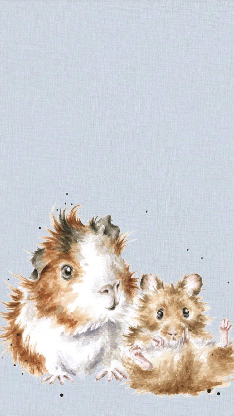 Guinea Pig Phone Wallpaper