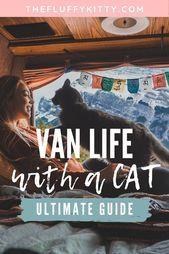 Photo of Ultimativer Leitfaden für das Van-Leben mit einer Katze (+ Van-Tour) – Fluffy K…