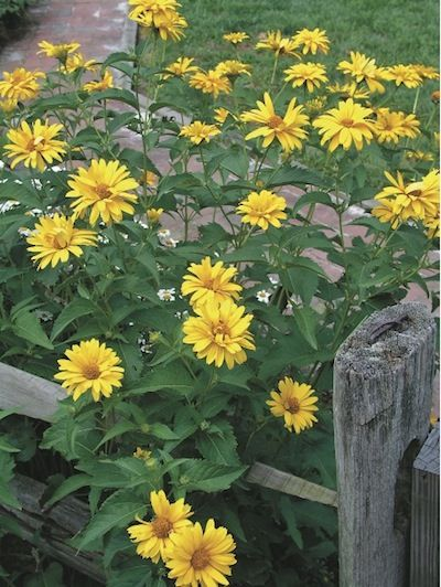 Flower Garden Designs Three Season Flower Bed Flower Gardens