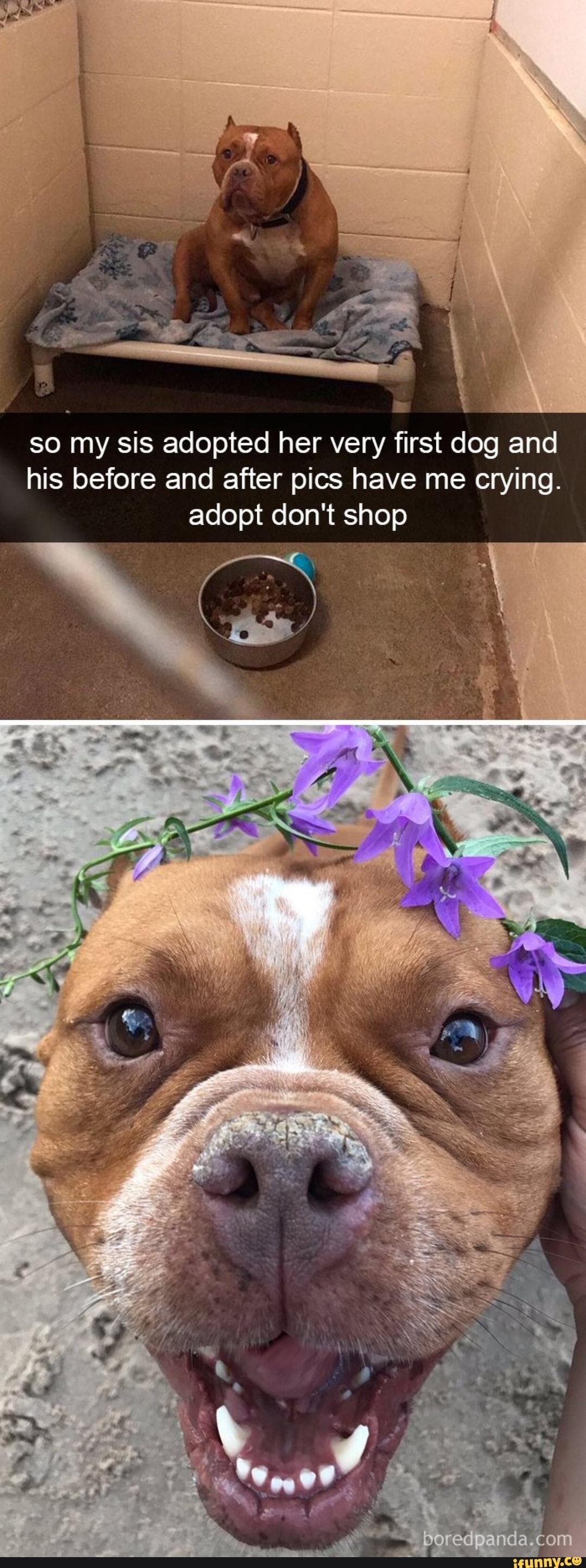 So my sis adopted her very first dog and his before and