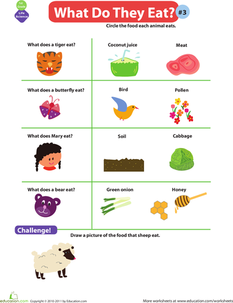 What Do Animals Eat? 3 Worksheets, Activities and