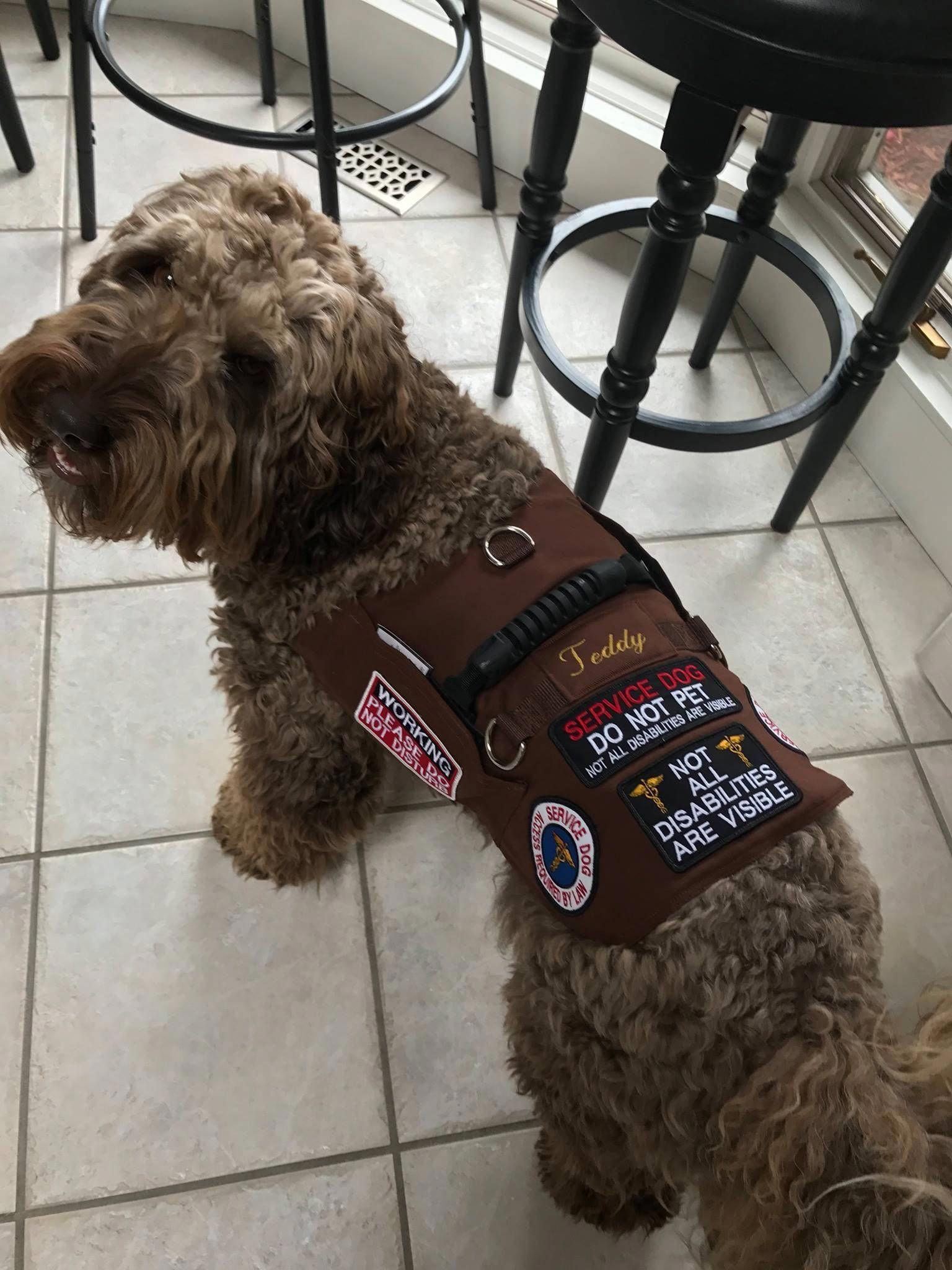 Can You Train Your Dog MasterDogTraining Service dog