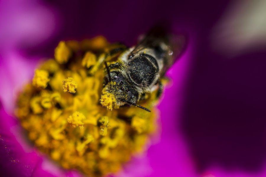 "Busy Bee. ""work"" by halil gündüz, via 500px."