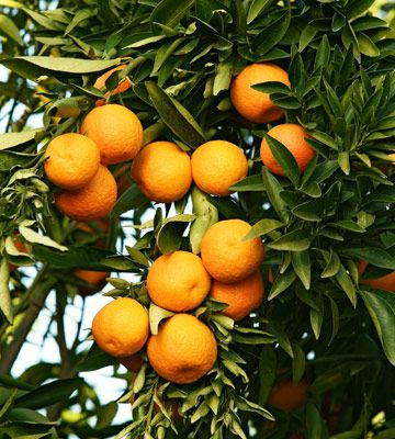 Clementines?  Yes please!