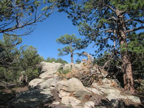 Bull Ridge Ranch - 37 acres in Custer County Colorado. $104,000. Build your #dreamhome. @twilageroux