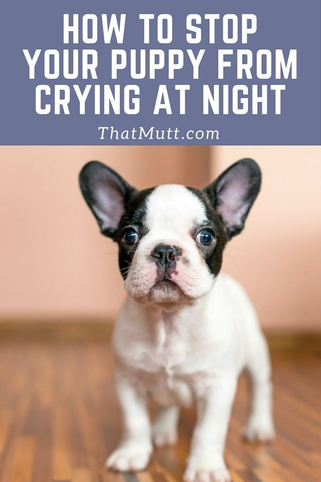 How Long Do Puppies Cry At Night Crying At Night Crying Puppy