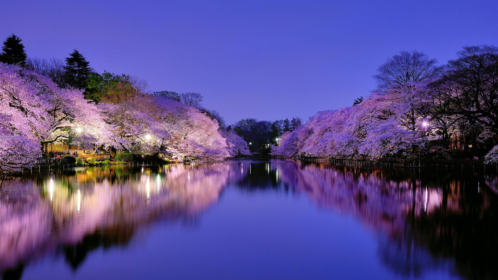 Japon, Osaka, parc de la ville pendant la nuit, lac ...