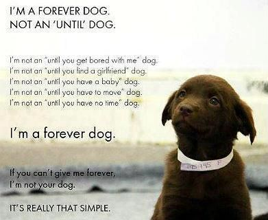 If You Have A Forever Dog Take The Next Step To Train Your Dog