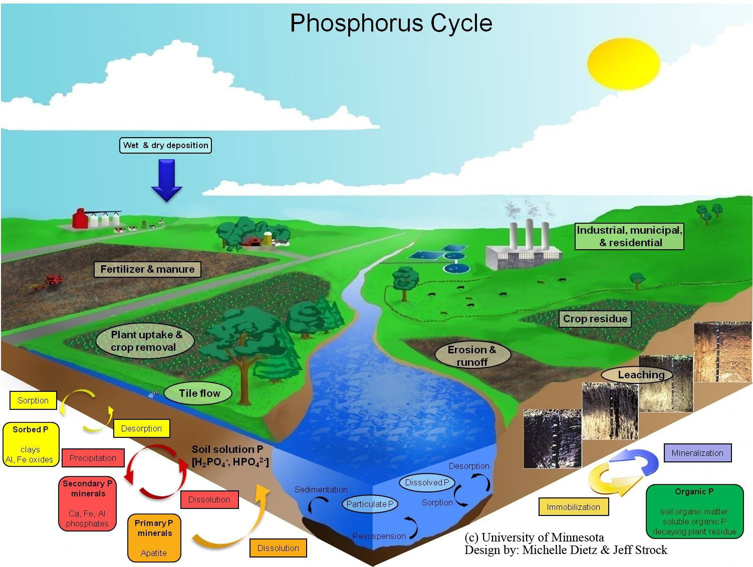 Phosphorus cycle in aquatic ecosystem (). | Aquatic Ecosystem ...
