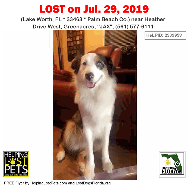"""LOST DOG! Have you seen """"JAX""""? LOSTDOG Jax LakeWorth"""