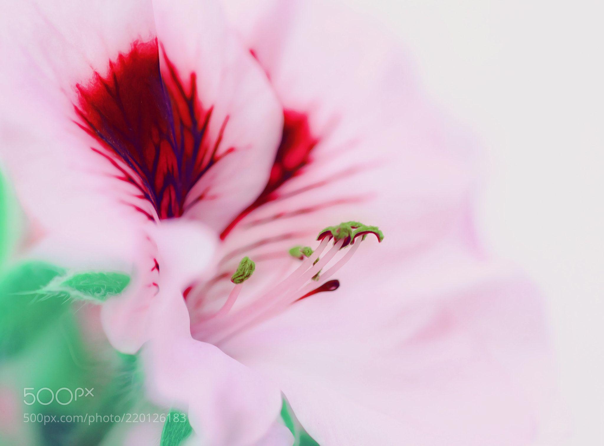 textura suave (Miguel Perea  C / Sevilla / Spain) #NIKON D3 #macro #photo #insect #nature