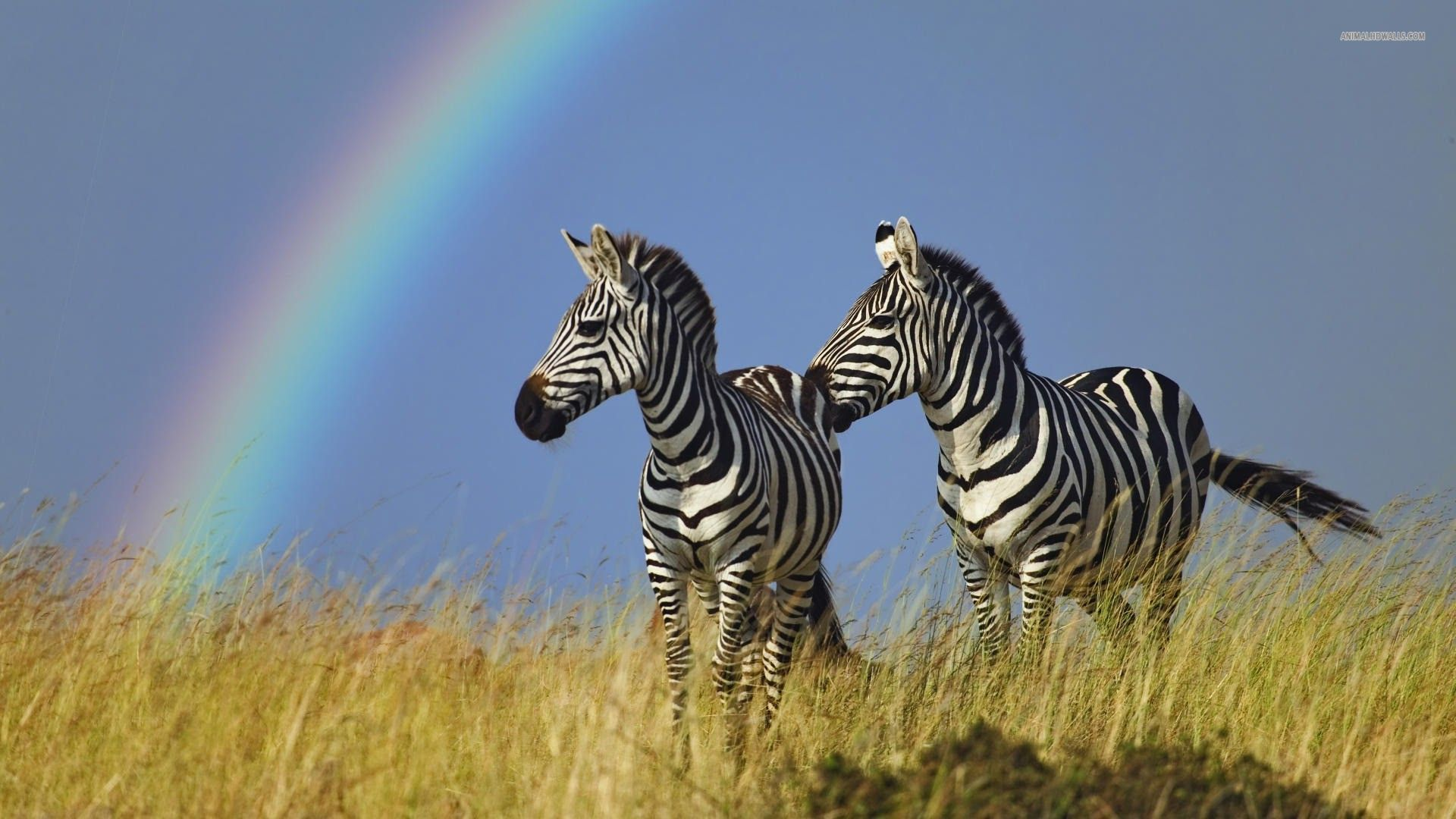 Pin By Sarah Neal On Zebras And Zorses