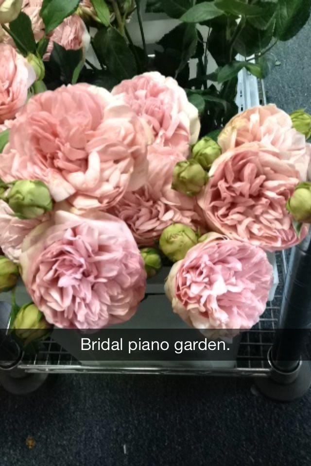 Merveilleux Bridal Piano Garden Rose