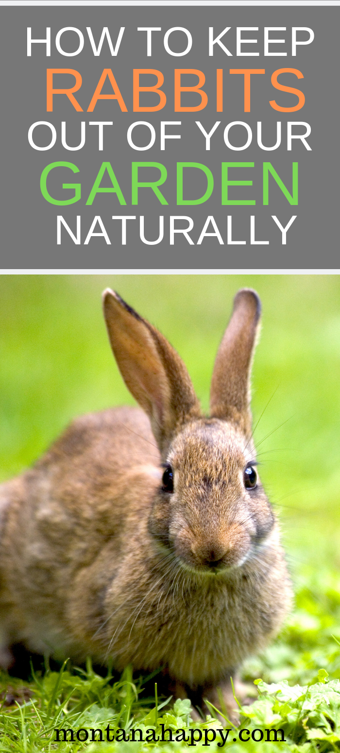 How to Keep Rabbits Out of Your Garden Naturally | Garden ...