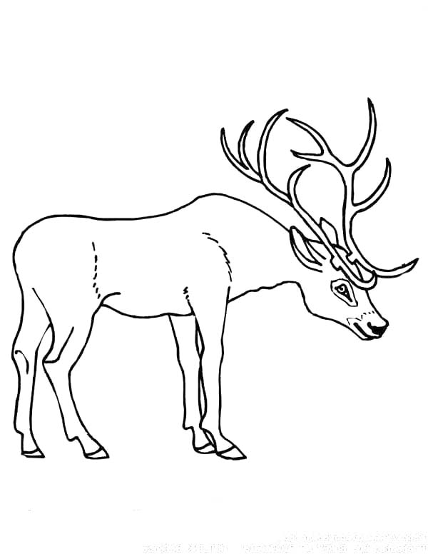 Deer Antler Coloring Page Coloring Sun Deer Coloring Pages Coloring Pages Deer