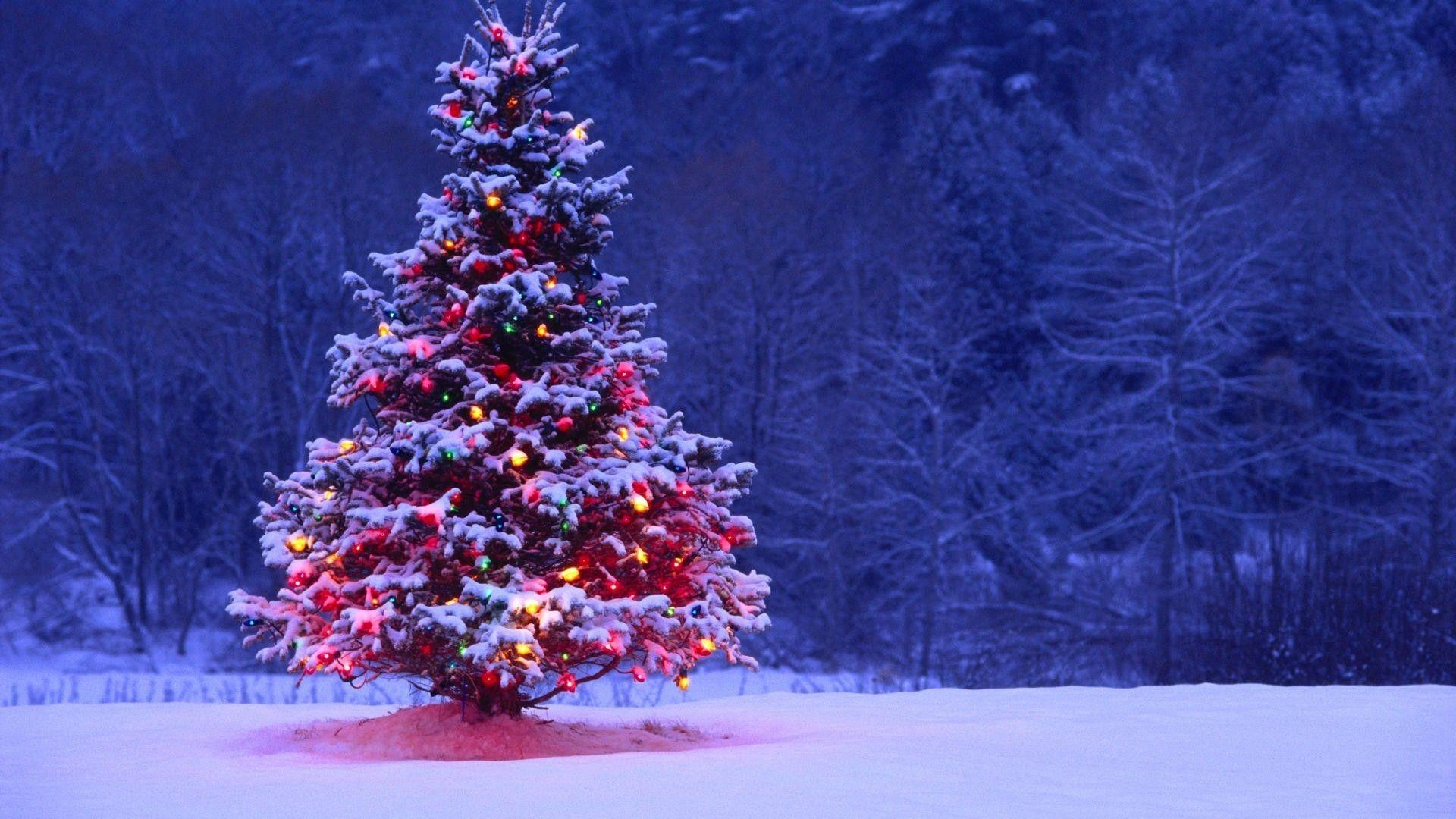 10 New Christmas Tree Wallpaper Backgrounds Desktop Full Hd 1080p For Pc Background Lumieres De Noel Exterieur Noel A L Exterieur Fond De Noel