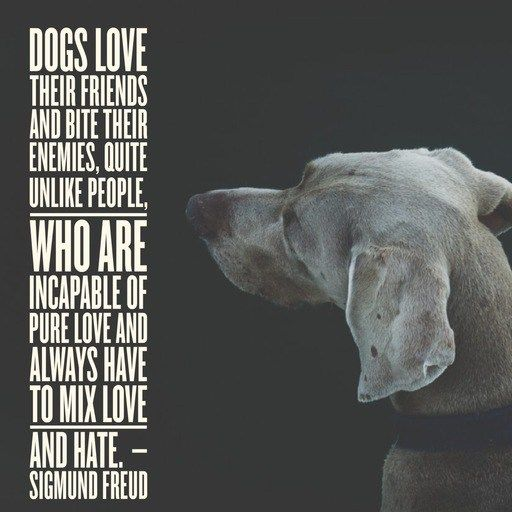 Dog Quotes 25 Sayings Only Dog Lovers Will Understand Dog Quotes Dogs Dog Love