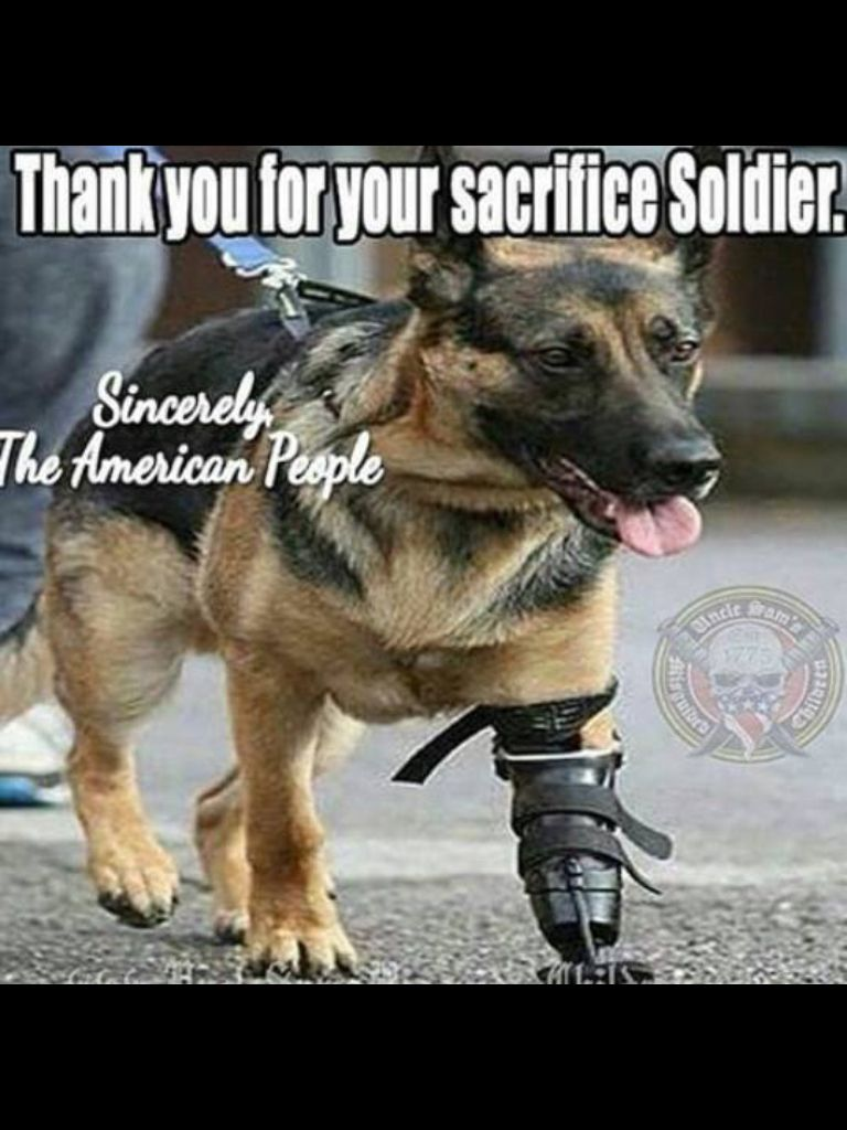 Wounded Warrier School Pinterest Dogs Military Dogs And Animals