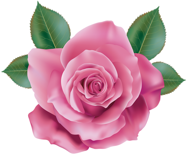 Pink Rose Transparent Png Clip Art Rose Clipart Digital Flowers Flower Clipart