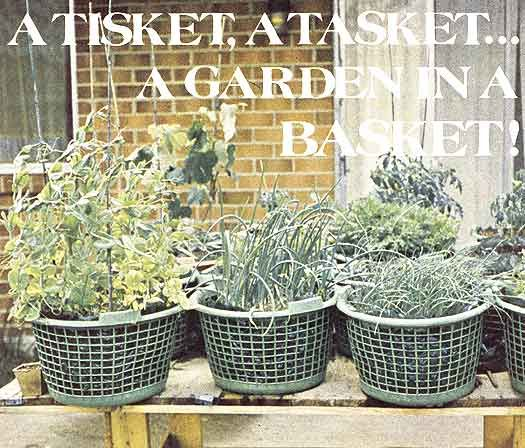 container gardening vegetables. Growing Vegetables In Containers - Organic Gardening Container