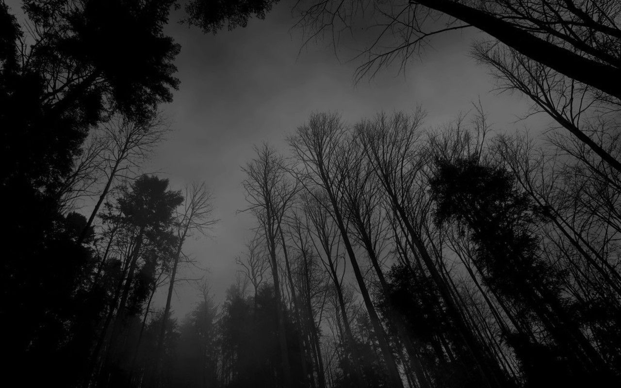 Dark Forest Moon Wallpapers Mobile On Wallpaper 1080p Hd Black