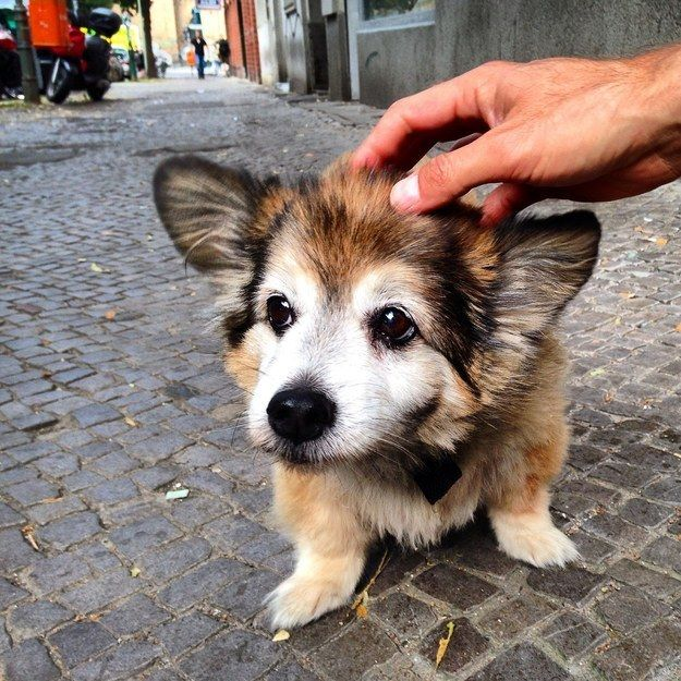 32 Reasons Every Day Should Be National Dog Day Cute Animals Cute Dogs Animals