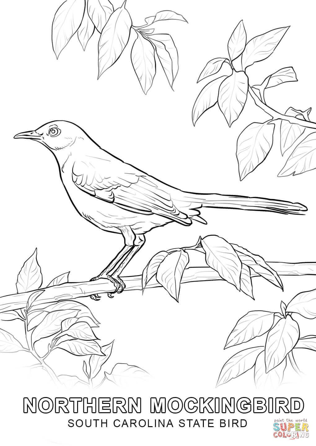 South Carolina State Bird Coloring Page Free Printable Coloring