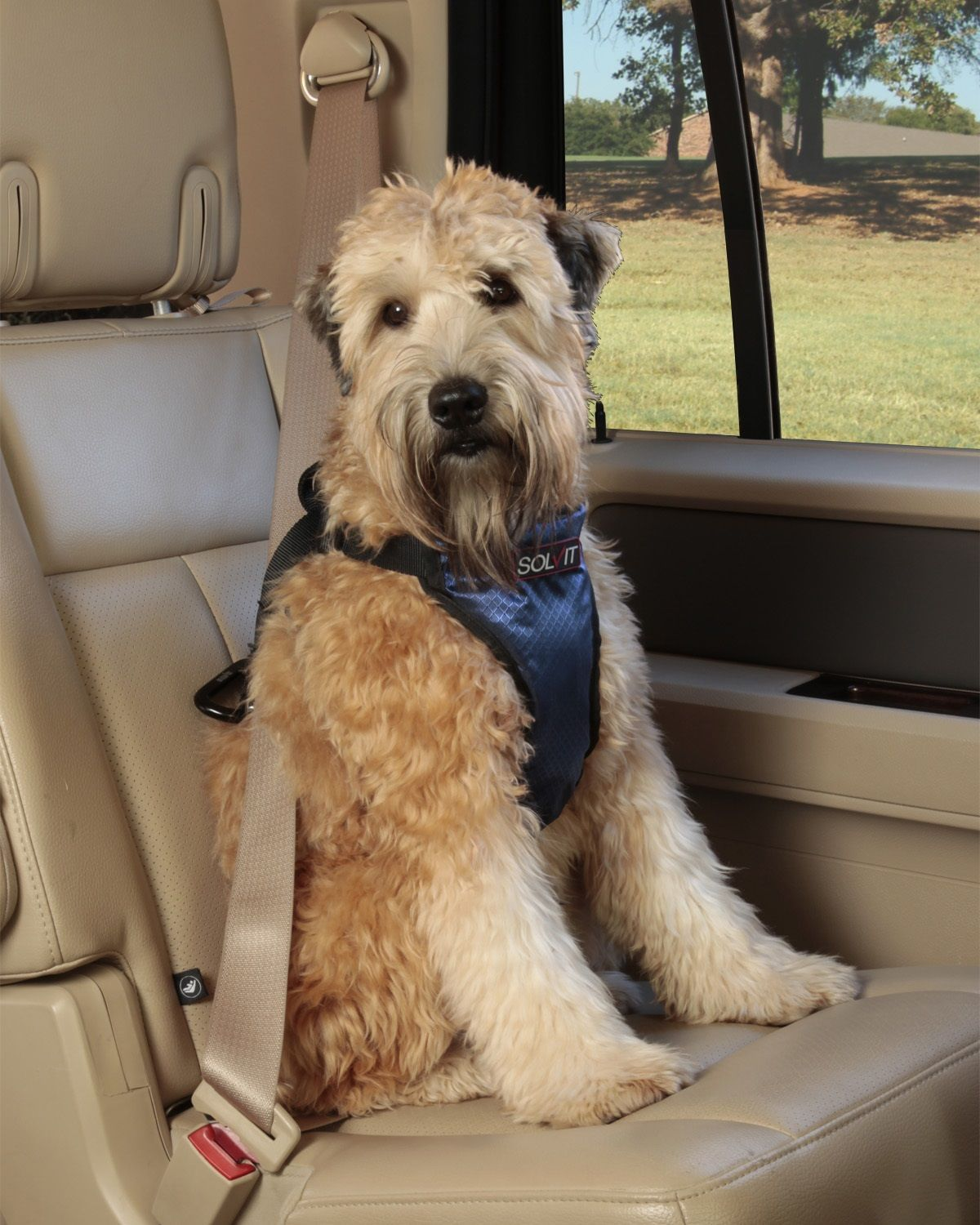 Dog Car Restraint and Harness | Pet Safety Tips | Pinterest | Dogs