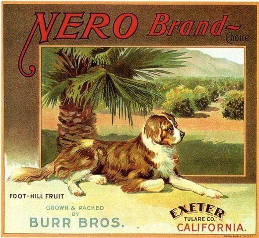 Exeter Tulare County Nero Newfoundland Dog Orange Citrus Fruit Crate Label Advertising Art Print Fruit Crate Label Vegetable Crate Labels Crate Label
