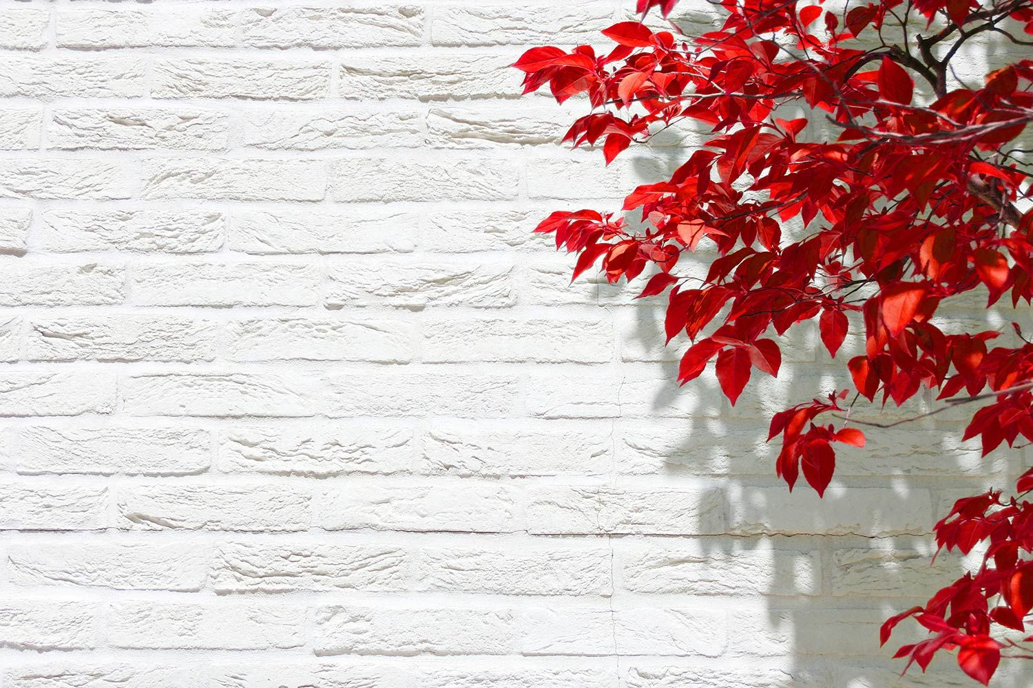 Order Red Leaves On White Wallpaper To Create Fantastic Wall Decor In Your Living Space Or Browse Thousands Of Other Nature Wallpaper Wallpaper White Wallpaper