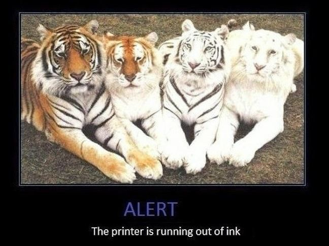 a variety of tigers