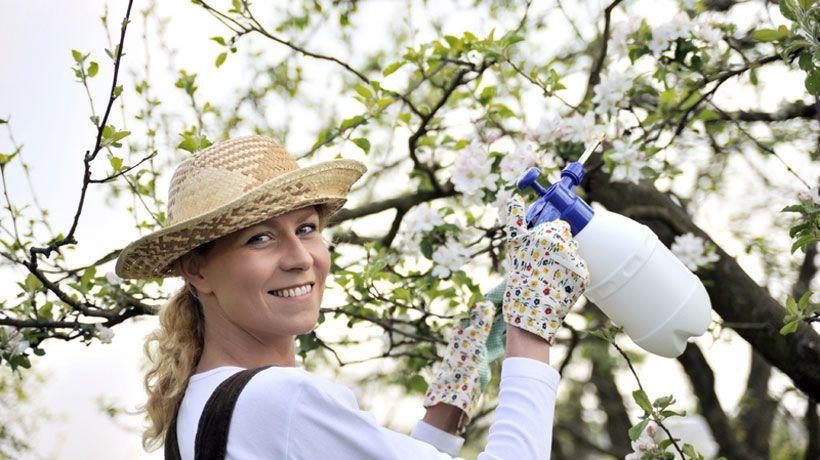 Jardim de ervas orgânico: sem pesticidas – agrotóxicos e sem fertilizantes | Senhora das Ervas, Especiarias e Cia - Alimentação Saudável, Dietas Naturais e Plantas Medicinais