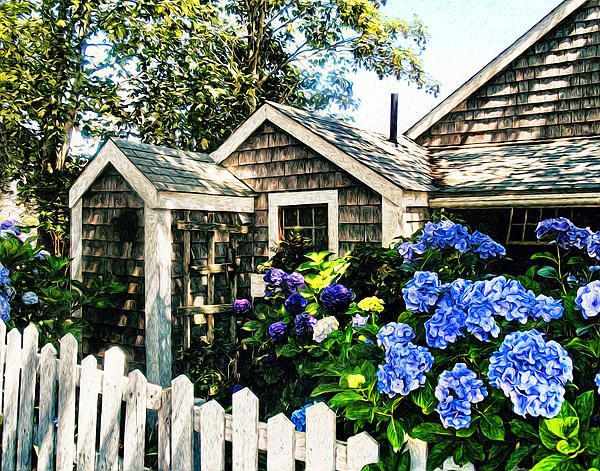 Nantucket Cottage Hydrangea Blue