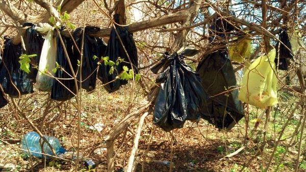 25 Dead Cats Found Hanging in Yonkers Trees