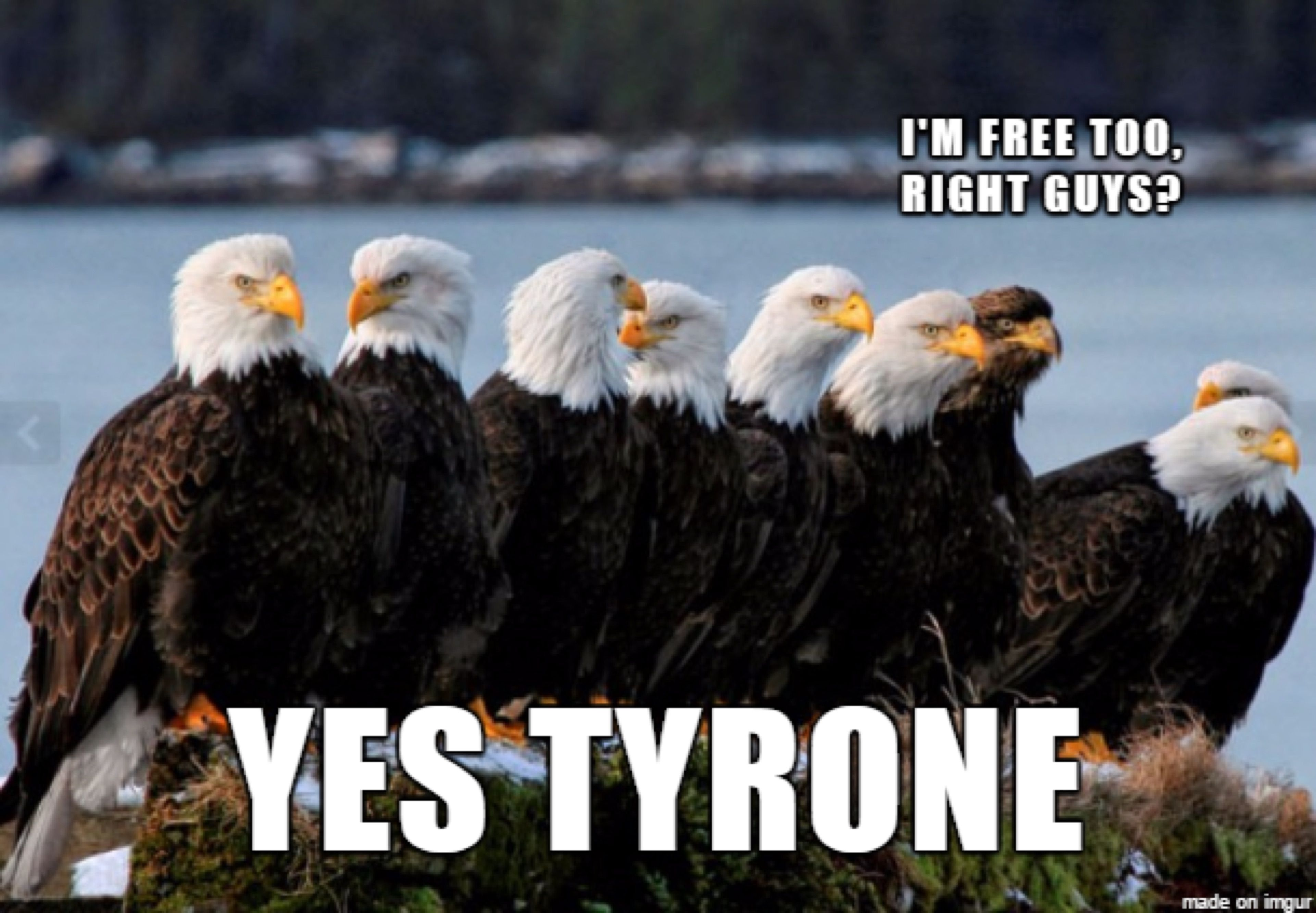 fdda09cafa76837419673db522b00a80 funniest bald eagle meme compilation america! humor pinterest