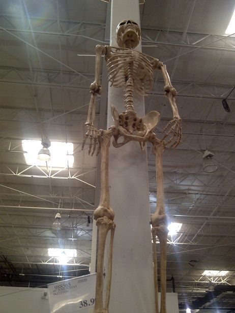 Hmmm At Costco May Have To Check It Out Halloween