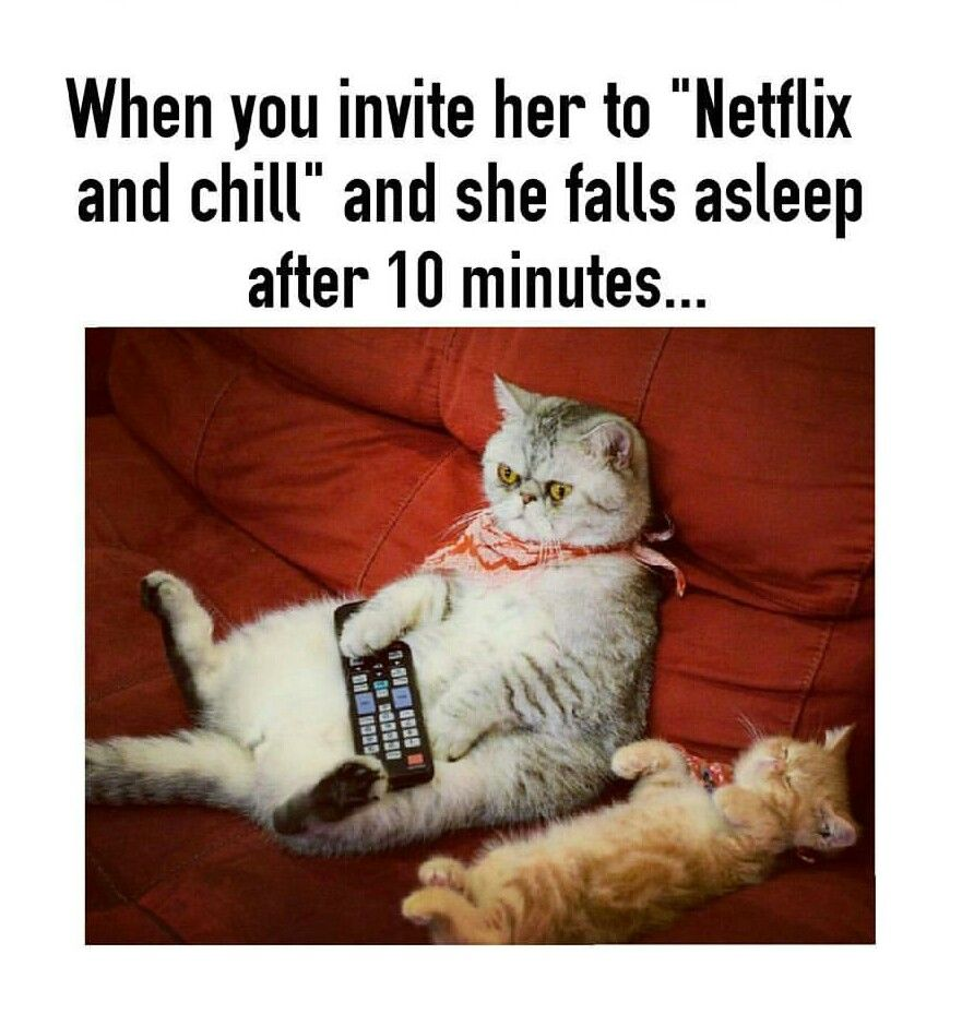 Netflix and fall asleep after 10 minutes Cute cats