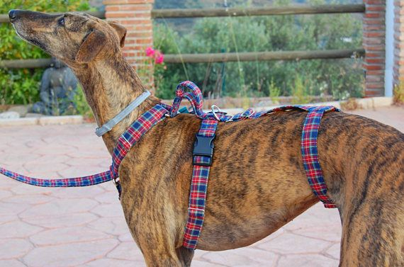 Greyhound Harness Dog Harness Galgos Harnesses Safety Harness