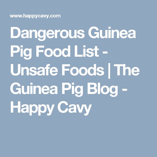 List Of Dangerous Foods For Guinea Pigs