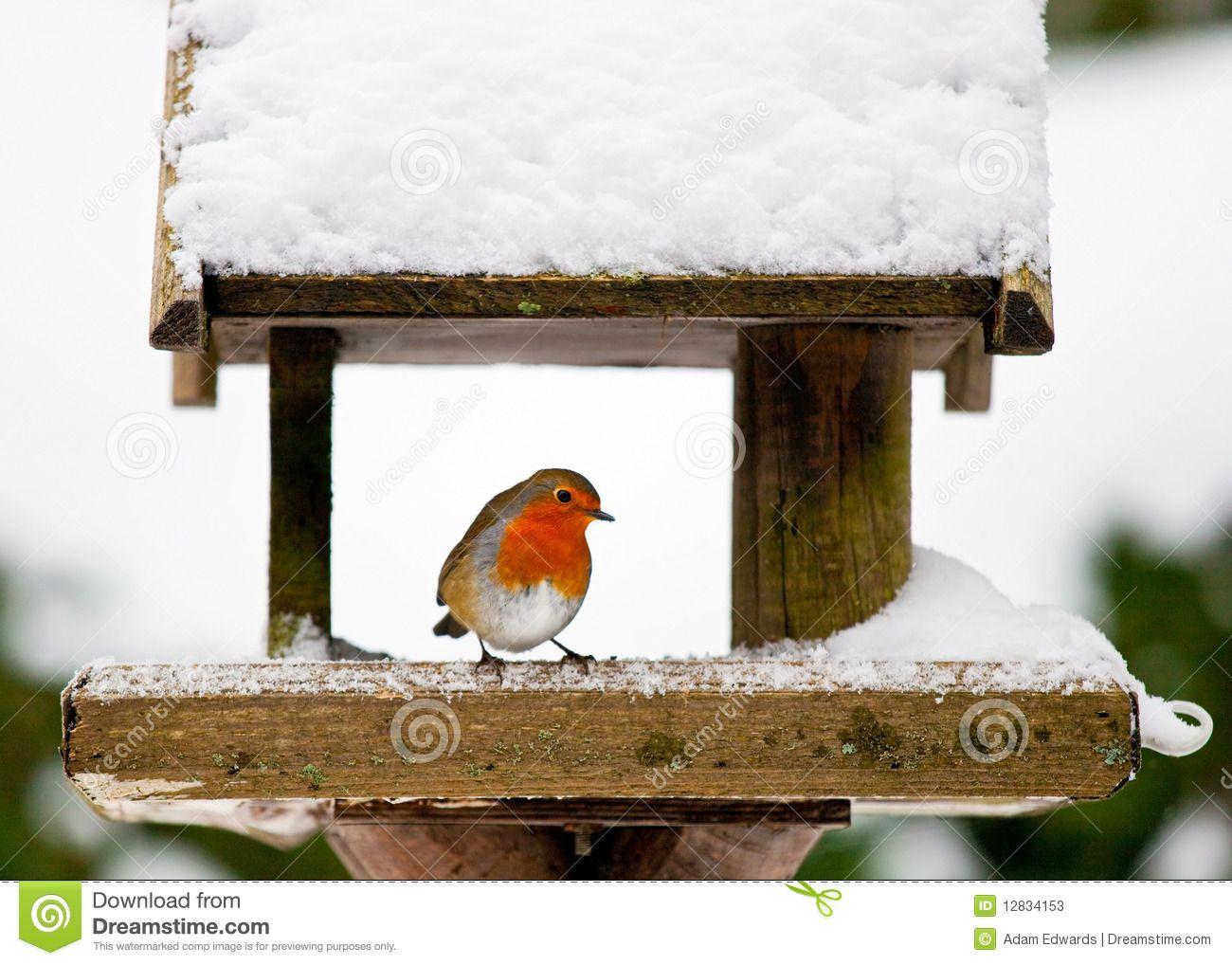 bird houses in the snow | Robin At A Snowy Bird Feeder In Winter Stock Photos - Image: 12834153