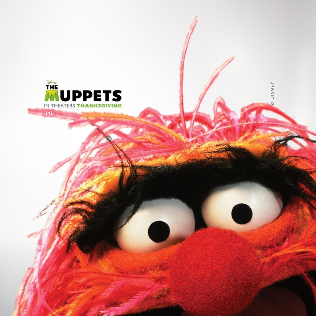 Quotes On The Muppets As Adult Oriented Characters: Animal Muppet, The Muppets