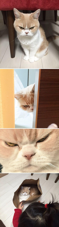ป กพ นโดย P O ใน แมว Cats ล กแมว แมวน อย แมว