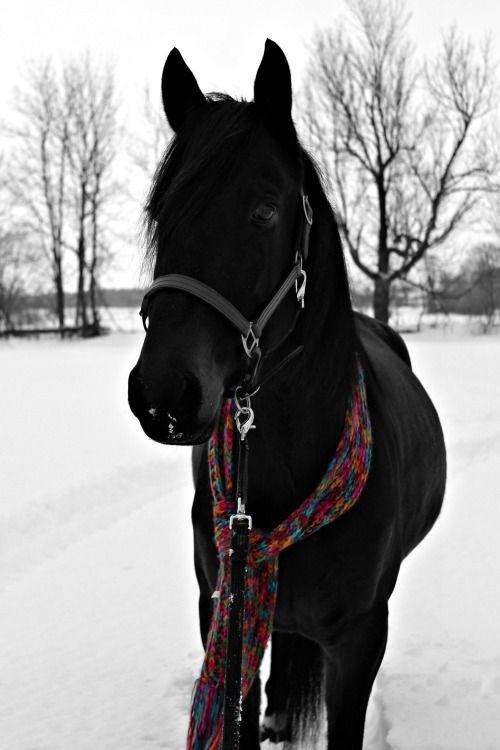 \\black beauty
